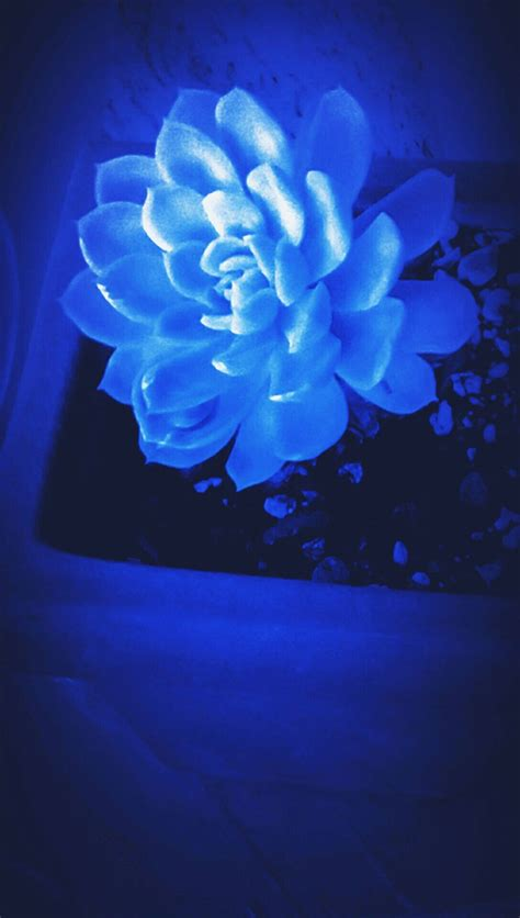 pin  blue aesthetic