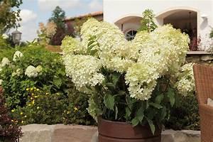 Bambus Zurückschneiden Frühjahr : sortiment xxl pflanzen ~ Whattoseeinmadrid.com Haus und Dekorationen