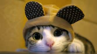 hat cat hat cat wallpaper meh ro