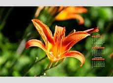 Kate Net Calendar Wallpaper WallpaperSafari