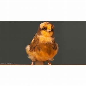 Cout De La Vie Aux Canaries : nos conseils sur canari fris disponible dans nos animaleries sur b ~ Medecine-chirurgie-esthetiques.com Avis de Voitures