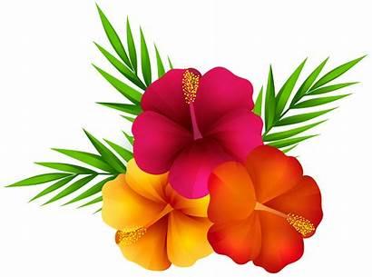 Tropical Flowers Flower Clipart Clip Exotic Transparent