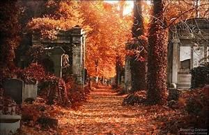 arboles, autum tree, autumn, beautiful, cemeteries ...