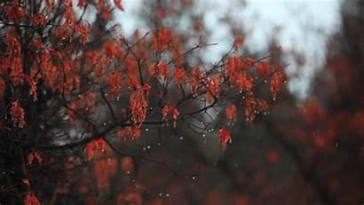 Rain Soft Autumn