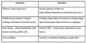 Chapter 10 Anatomy And Physiology Answer Key