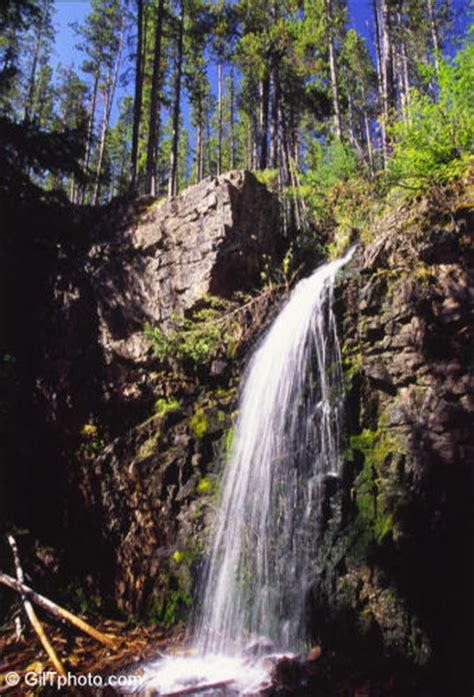 Lewis and Clark National Forest Montana