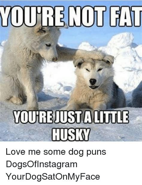 funny dog puns memes    sizzle deleters