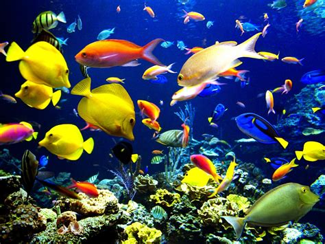 Non Shed Dogs Large by Pictures Of Fish In The Ocean Fish Pet Photos Gallery