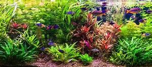 Aquarium Berechnen : die f nf sch nsten zierfische in den heimischen aquarien ~ Themetempest.com Abrechnung