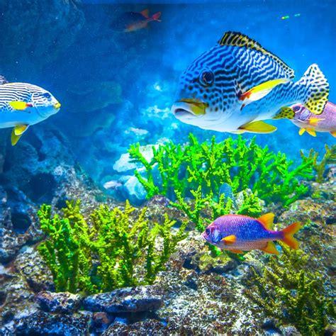 aquarium futura plan 232 te