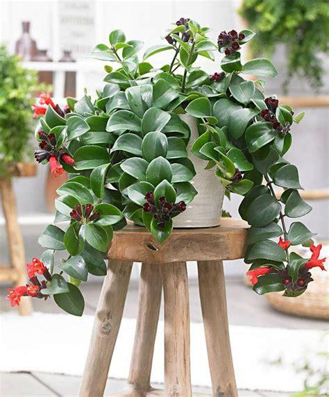 plante d interieur facile d entretien atlub