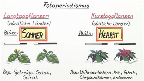 Licht Als Abiotischer Umweltfaktor by Licht Als Abiotischer Faktor Anpassung Der Pflanzen