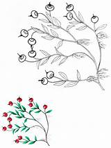 Coloring Cranberry Pages Berries Printable Recommended sketch template