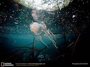 Funny box jellyfish wallpaper |Funny Animal