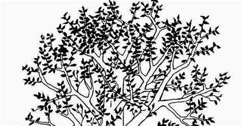 penjelasan  menggambar pohon  benar  tepat