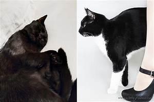 Katzenhaare Entfernen Kleidung : katzenhaare entfernen teppich awesome tierhaare vom polster entfernen so gehts with katzenhaare ~ Orissabook.com Haus und Dekorationen