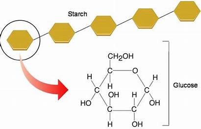 Carbohydrates Polysaccharides Starch Structure Polysaccharide Which Sugar