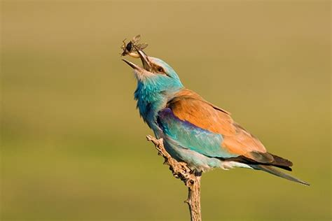 is a bird an omnivore science omnivores