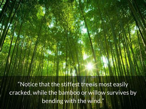 quotes  bamboo quotesgram