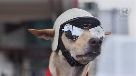 dog   philippines rides motorcycle