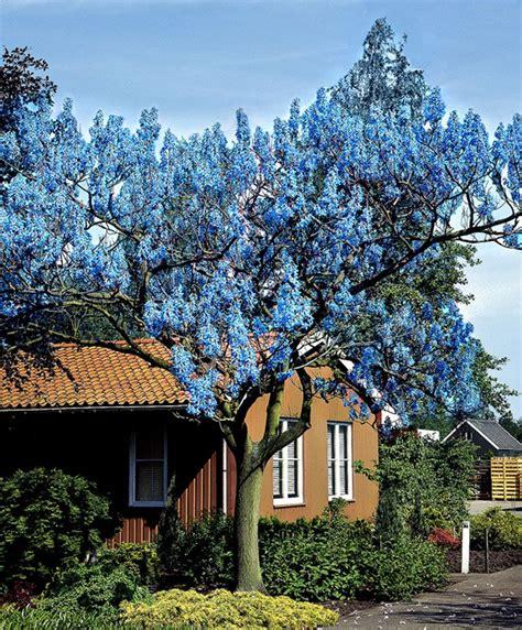 Garten Pflanzen Bäume by Blauglockenbaum B 228 Ume Str 228 Ucher Bakker Garten