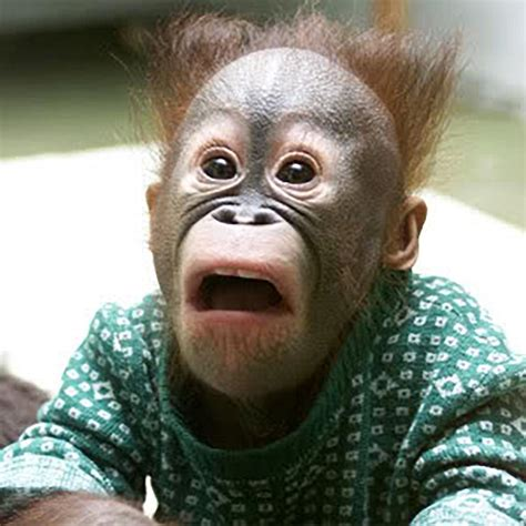 Surprised Meme - funny surprised monkey meme generator
