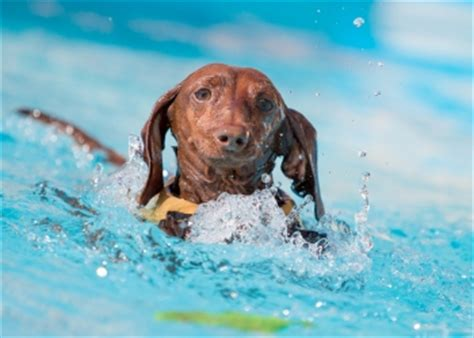 summer conditions pose extreme risks  pets