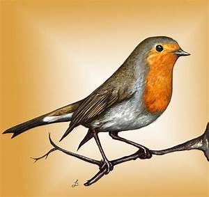 Robin bird Art Print | Robins, Robin bird and Bird
