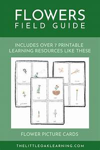 May Field Guide  Flowers