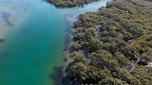 River, Estuary, Of, Mangrove, Forest, Swamps, Aerial, Drone, Footage, Stock, Video, Footage