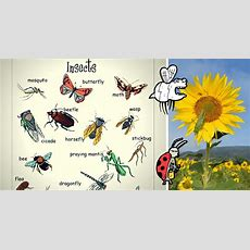 Insects Vocabulary In English  Eslbuzz Learning English
