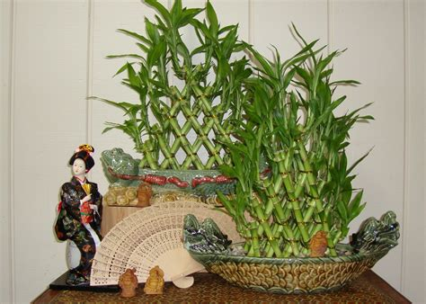 feng shui embodying harmony ferns  petals