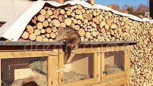 Le Chat Veut Le Lapin Ouvert Huche Clips Vidos Vido