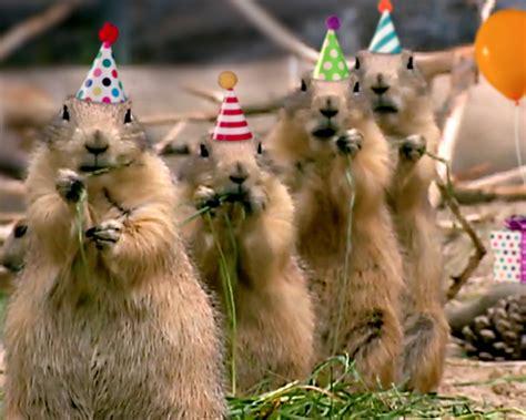 prairie dog birthday song personalize lyrics