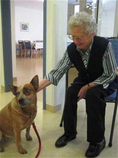 adopt  australian cattle dog illinois