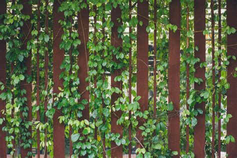 Ideen Für Garten by Sichtschutz Ideen F 252 R Den Garten 187 Die Besten Tipps