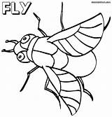 Fly Coloring Pages sketch template