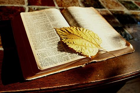 images writing table book read wood leaf