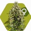MonterreyCannabis.com Venta de Marihuana a domicilio en ...