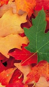 Autumn Iphone 6 Wallpaper on WallpaperGet com