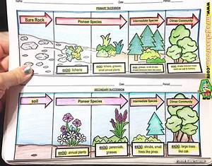 Ecological Succession  U2013 Primary  U0026 Secondary  U2013 Mrs Gs Classroom