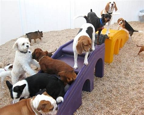 camp bow wow brings premium dog day  overnight care