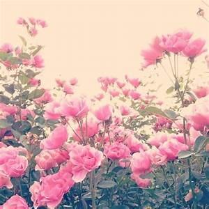 floral flowers on Tumblr