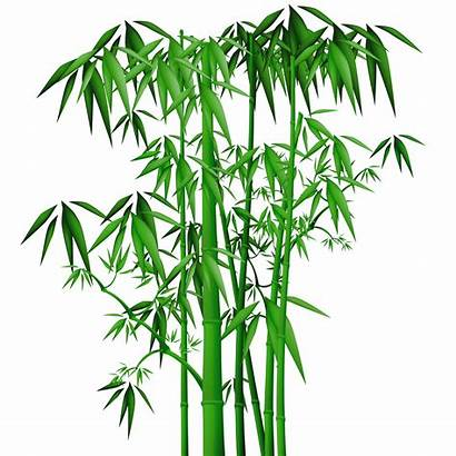 Bamboo Tree Chinese Clipart Leaves Painting Transparent