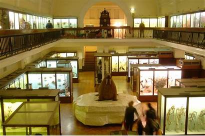 Museum Horniman Interior History Natural Collections Science