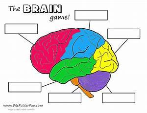 Human Brain Craft & Activities | Homeschooling | Pinterest ...