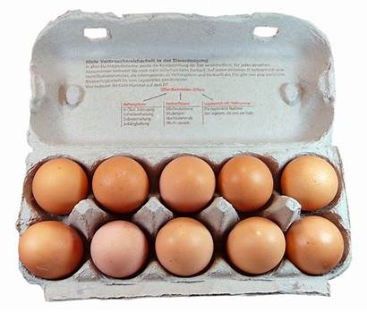 Egg Eggs Box Pack Transparent Chicken Carton