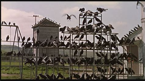 movie review the birds 1963 the ace black blog