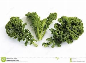 Curly-leaf Kale Stock Photo - Image: 50494812