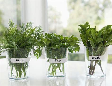 plantes aromatiques cuisine 17 meilleures idées à propos de jardin d 39 intérieur d